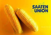 Семена кукурузы Зуанито от Заатен Юнион (Saaten Union®)