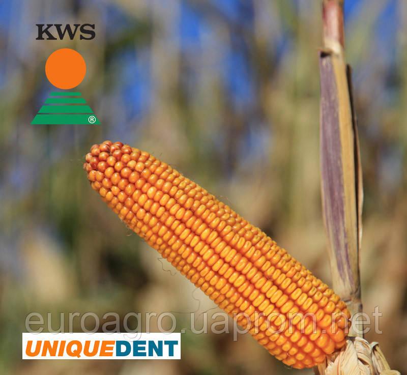 Семена кукурузы Каньйонс от КВС (KWS)