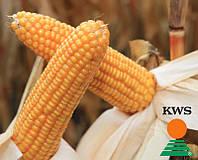 Семена кукурузы КВС НЕСТОР от КВС (KWS)