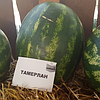 Арбуз Тамерлан F1/Tamerlan F1 Nunhems 1000 семян