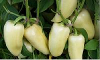 Семена перца Хаски F1, 500 шт, Enza Zaden