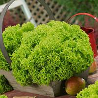 Семена салата Изольда Nasko 10 г