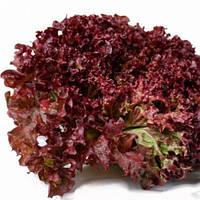 Семена салата Революция, 5000 шт, Nunhems