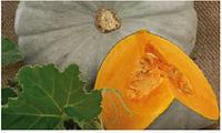 Семена тыквы Сампсон F1, 500 шт, Enza Zaden