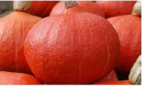 Семена тыквы Оранж Саммер F1, 500 шт, Enza Zaden
