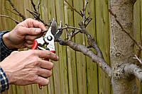 Обрезка деревьев, обрезка плодового сада в Киеве от 30 грн