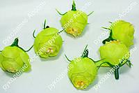 Головы ранункулюса зелень диаметр около 2.3см