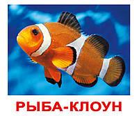 """Карточки большие русские с фактами, ламинированые """"Обитатели воды"""" 20шт, 056819"""