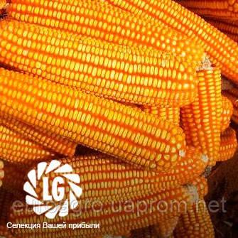 Семена кукурузы ЛГ3258 (LG3258), фото 2