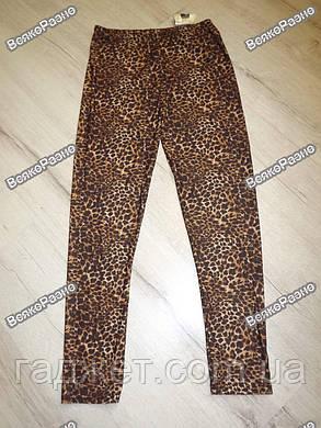 Леопардовые лосины, фото 2