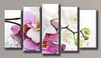 """Модульная картина на холсте из 5-ти частей """"Орхидея на стекле"""""""