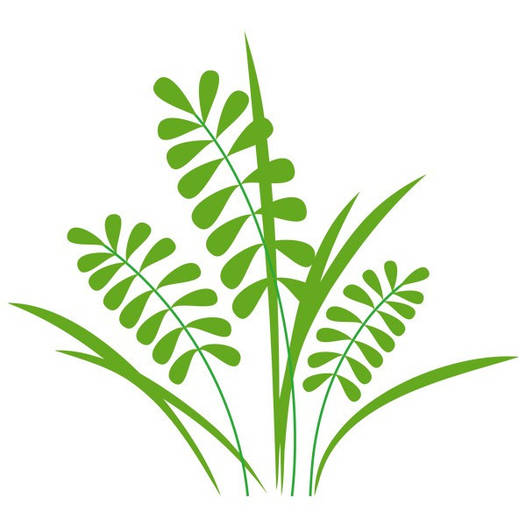 Наклейка интерьерная виниловая (50х50 см, варианты цветов) Herb