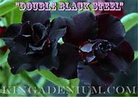 Адениум семена, сорт Double Black Steel