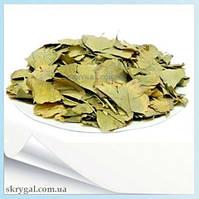Гинкго-Билоба листья., фото 1