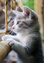 """Електричний настінний обігрівач-картина """"Котик"""""""
