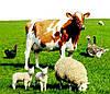 Биовит-80, 300 гр, кормовой антибиотик при выращивании и откорме сельхоз животных и птиц