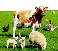 Биовит-80 1 кг, кормовой антибиотик при выращивании и откорме сельхоз животных и птиц