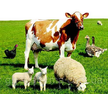 Антибиотик Биовит-80, 300 гр, при выращивании и откорме сельхоз животных и птиц, фото 2