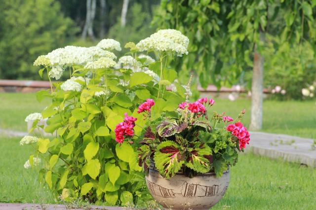 Полив растений вручную фото Тепловик