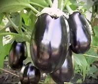 Баклажан  Галине F1   10 семян