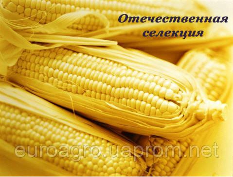 Семена кукурузы ДН Пивиха Отечественная селекция, фото 2
