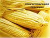 Семена кукурузы ДН Пивиха Отечественная селекция