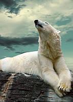 """Настенный обогреватель-картина Shine """"Белый медведь"""" 84x60 см."""