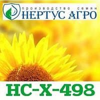 Семена подсолнечника ( Нертус ) НС-Х-498 элит