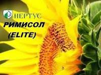 Семена подсолнечника ( Нертус ) Римисол Элит