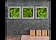 Модульные картины из мха, фото 4