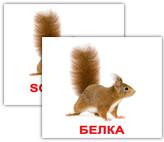 Дикі тварини/Wild animals МІНІ 40. Картки Домана