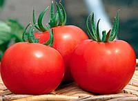 Семена томата полудетерминантного Силует F1 Syngenta 500 шт