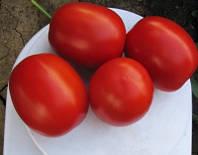Семена томата детерминантного Литтано F1 Clause от 5 000 шт