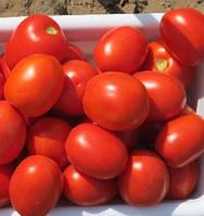 Семена томата детерминантного Фоккер F1, от 25000 шт, Nunhems