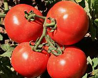 Семена томата детерминантного Садин F1, от 10 шт, Enza Zaden