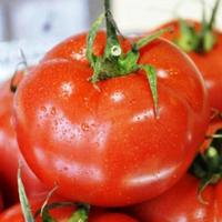 Семена томата индетерминантного Айвенго F1 Rijk Zwaan 1 000 шт