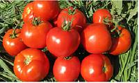 Семена томата детерминантного Имран F1, от 500 шт, Enza Zaden