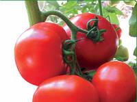 Семена томата полудетерминантного Ядвига F1, от 100 шт, Kitano Seeds