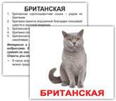 Породы кошек. Карточки Домана. Мини. 20 шт.
