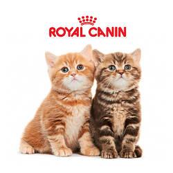 Royal Canin сухой корм для котов