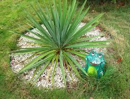 Юкка нитчата 3 річна , Юкка нитчатая / Юка нитчатая, Yucca filamentosa  , фото 3