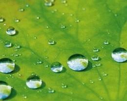 Гидрофобная добавка к фасадным краскам Dow Corning® 88 Additive