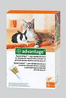 Капли от блох и клещей Bayer Advantage (Адвантейж) 40 - для котов весом до 4 кг и хорьков 1 пипетка