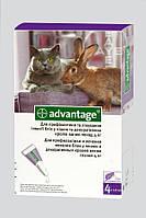 Капли от блох и клещей Bayer Advantage 80 (Адвантейж)  для котов весом более 4 кг  (1 пипетка)
