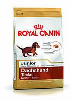 Royal Canin (Роял Канин) Dachshund Junior корм для щенков таксы 1.5 кг.