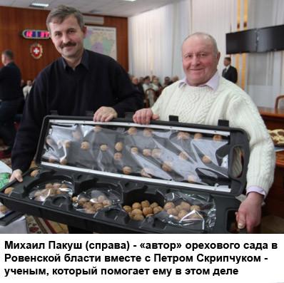 В Украине заложат самый большой в стране ореховый сад