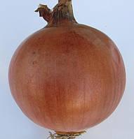 Семена лука Фундадор F1 250 000 сем. Cora Seeds