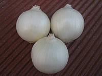 Семена лука Вайт Опера F1 250 000 сем. Cora Seeds