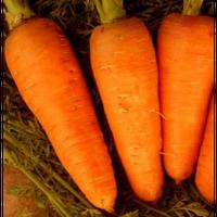 Семена моркови Болтекс. Упаковка 0,5 кг. Производитель Clause