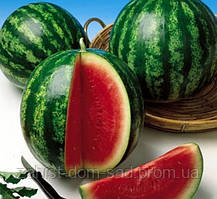 Семена арбуза АУ-Продюсер/Hollar Seeds(500г)- усовершенствованный сорт известного сорта Кримсон Свит